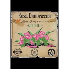 Erbe di Janas® - Rosa Damascena
